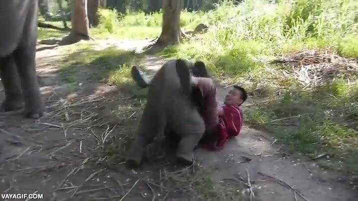 Enlace a El abrazo del elefantito