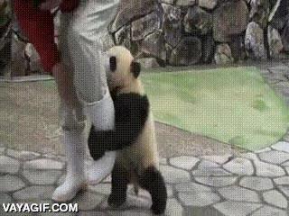 Enlace a ¡No escaparás de mi poderoso abrazo del oso! Oh vaya, pues sí...