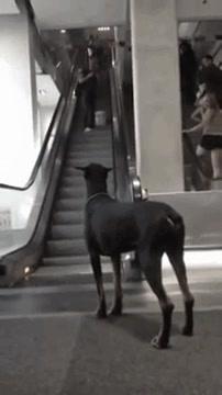 Enlace a Un perro muy bien enseñado esperando pacientemente a reencontrarse con su humano