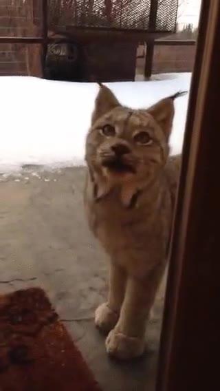 Enlace a ¿Me dejáis entrar? Hace mucho frío aquí fuera...