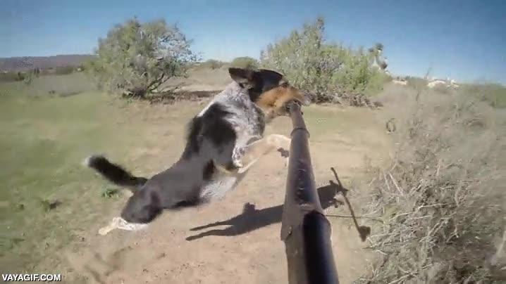 Enlace a Esto es lo que vería un palo llevado por un perro