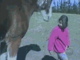 Enlace a Los caballos también tienen su pronto