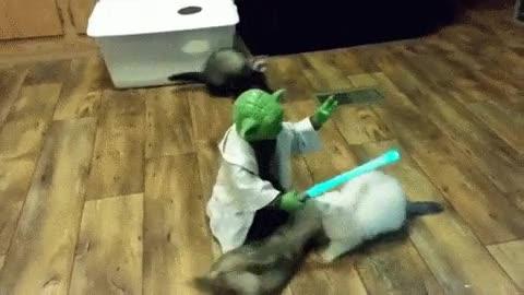 Enlace a El maestro Yoda entrenando hurones