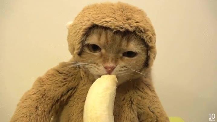 Enlace a Uy, qué gatito más mono...