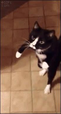Enlace a The Walking Cat