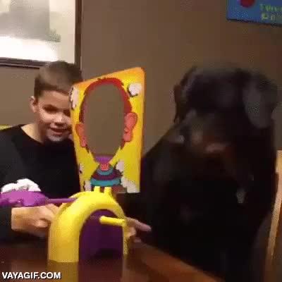 Enlace a Jugando con el perro con los regalos de Reyes