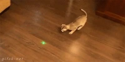 Enlace a Derrapando en el salón a la caza del punto láser