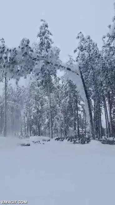 Enlace a Muerte vegetal por exceso de nieve y hielo