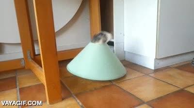 Enlace a Cuando el gato se convierte en conejo