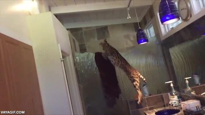 Enlace a Esto es lo que pasa cuando tienes un serval en casa, son unos cotillas