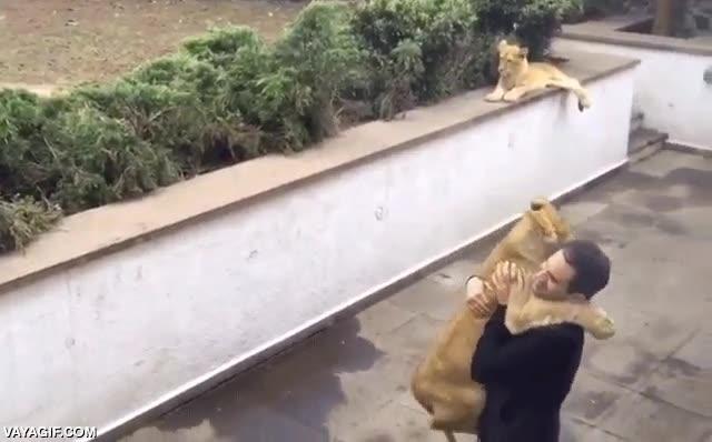 Enlace a Hombre atacado salvajemente por un despiadado león