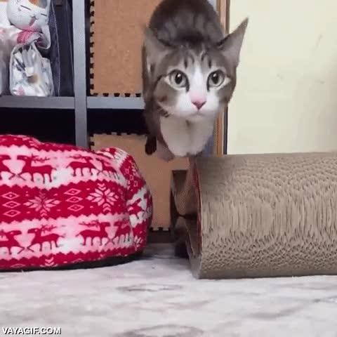 Enlace a El misil felino