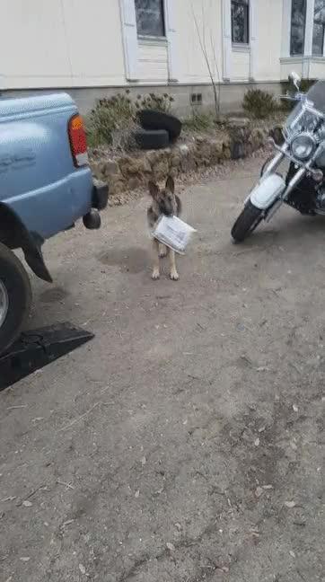 Enlace a Creo que el entrenamiento para ser perro mensajero no está funcionando demasiado