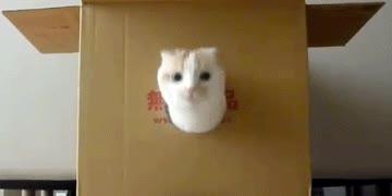 Enlace a Cuando quieres un reloj de cucú, pero solo tienes un gato