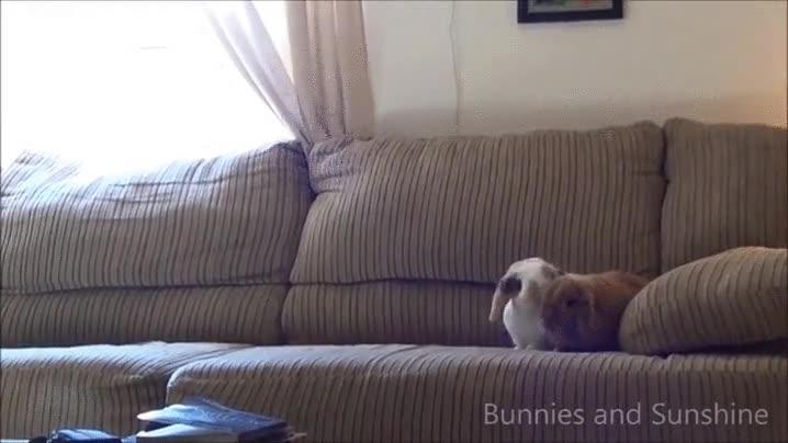 Enlace a Conejos realizando un test de colisión lateral
