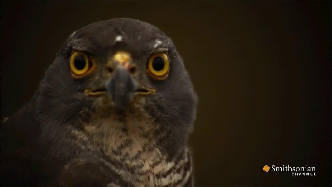 Enlace a No tenía ni idea que las águilas tuvieran limpiaparabrisas