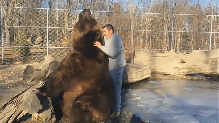 Enlace a Los osos al final solo son perros muy grandes