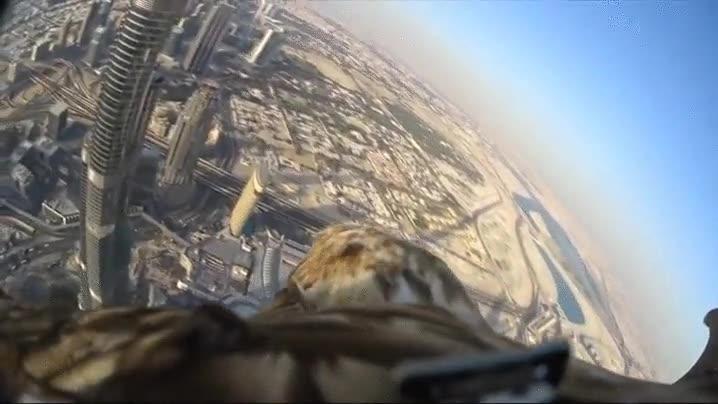 Enlace a Dubai a vista de Águila Airlines. Simplemente alucinante