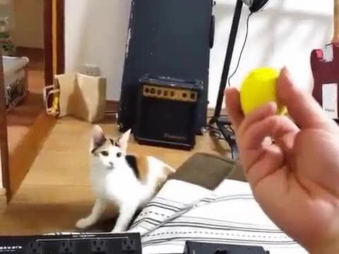 Enlace a Un buen gato siempre acude raudo y veloz a la llamada del deber
