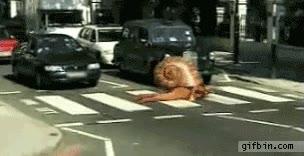 Enlace a Un caracol debe cruzar el paso de peatones siendo fiel a sus principios