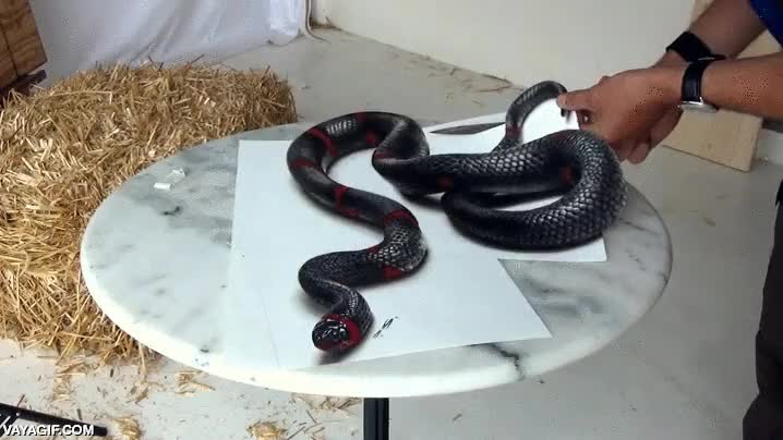 Enlace a Dibujo realista de una serpiente. No se vosotros pero si lo veo salgo corriendo