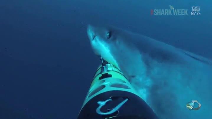 Enlace a Un dron submarino filma el ataque de un tiburón