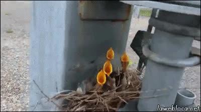 Enlace a Pájaros pensando que ha llegado la hora de comer
