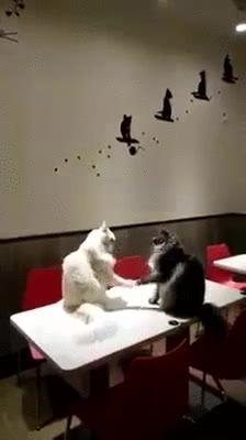 Enlace a Gatos intentando jugar a Piedra, Papel, Tijera