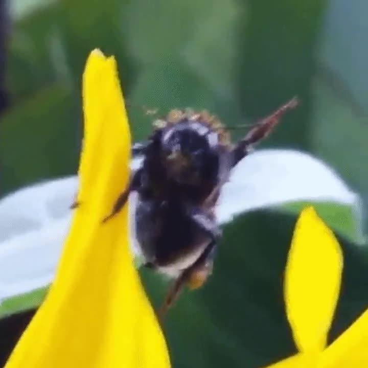 Enlace a ¡Hola abeja! ¡Hola humano!