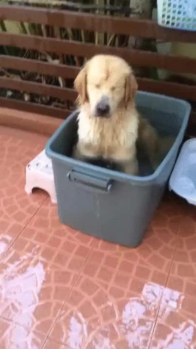 Enlace a Parece que a alguien le encanta darse un baño