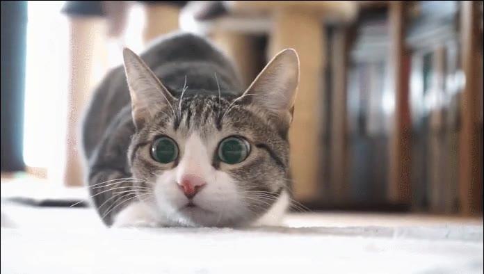 Enlace a Espectacular dilatación de los ojos de un gatete
