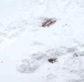 Enlace a La nevada del siglo fue la mejor oportunidad de demostrar sus dotes natatorias
