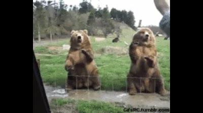 Enlace a La prueba de que los osos son los animales más majos y los gatos los más rancios