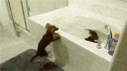 Enlace a El entusiasmo de algunos perros por la hora del baño