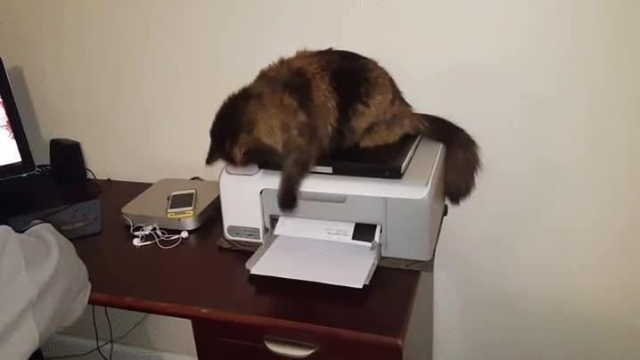 Enlace a Los gatos siempre toman represalias cuando les fastidias una buena siesta
