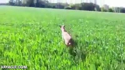 Enlace a Perro con complejo de canguro
