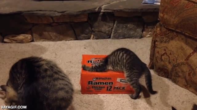 Enlace a Los gatos y su adicción por el ramen
