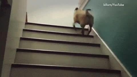Enlace a La manera de subir escaleras de los carlinos siempre saca una sonrisa