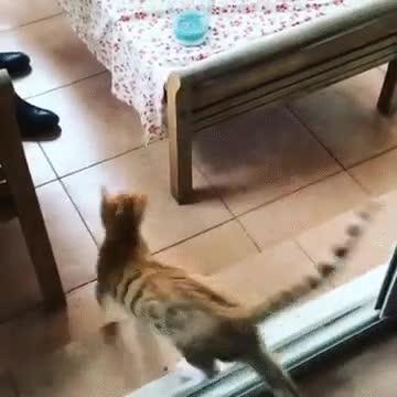 Enlace a Ni los gatos se fían de la peligrosidad de un cristal limpio