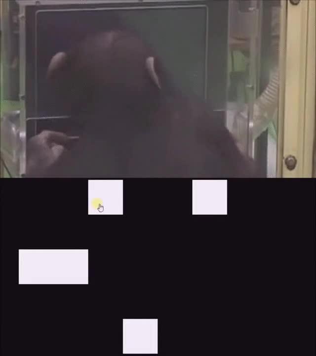 Enlace a Este mono es ya más inteligente que algunas personas