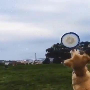 Enlace a Este perro no es precisamente un atleta...