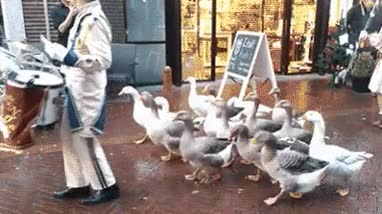 Enlace a Lo que ha acabando siendo el Duck Army