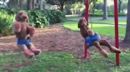 Enlace a Los parques de perros han cambiado bastante