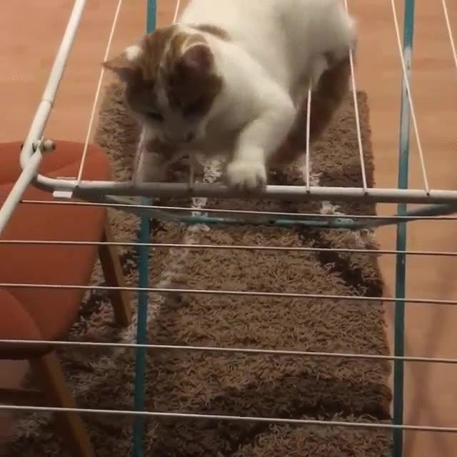 Enlace a Este gato descubre que hay zonas en la que es mejor no sentarse