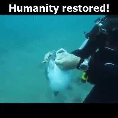 Enlace a Fe en la humanidad restaurada