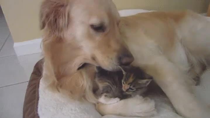 Enlace a ¿Quién dijo que no podían ser buenos amigos?