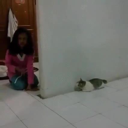 Enlace a Este gato no está destinado a ser un buen cazador