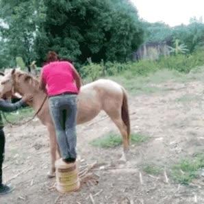 Enlace a Cómo no debes montar a caballo