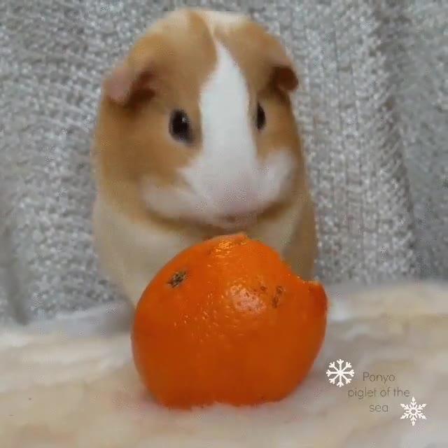Enlace a Puede que nunca hayas visto comer mandarinas de una forma tan adorable