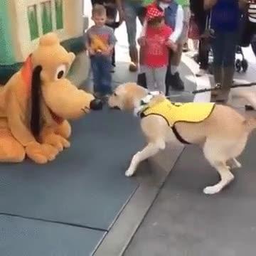 Enlace a Este perro guía se emociona al conocer a Pluto